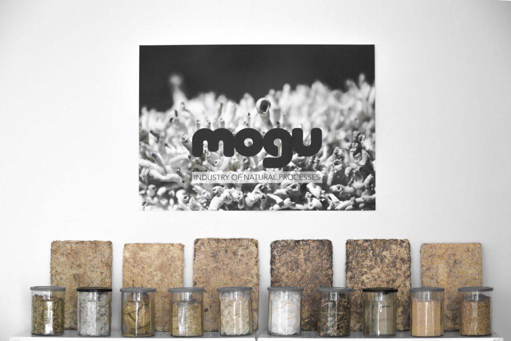 Das norditalienische Start-up Mogu setzt Pilz-Myzelien als Baustoff ein. Noch heuer erfolgt der Markteintritt mit schallabsorbierenden Paneelen und Bodenfliesen.