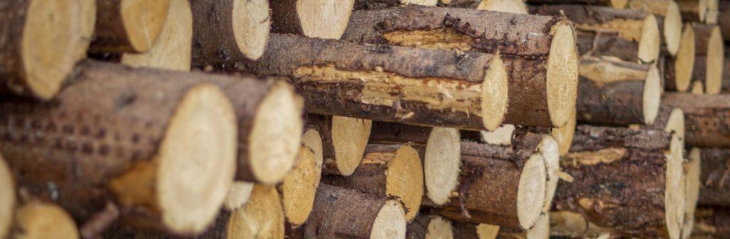 Holz als Baustoff der Zukunft