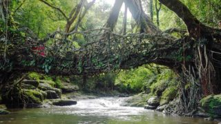 Lebende Brücken von Meghalaya