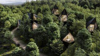 Leben in den Bäumen