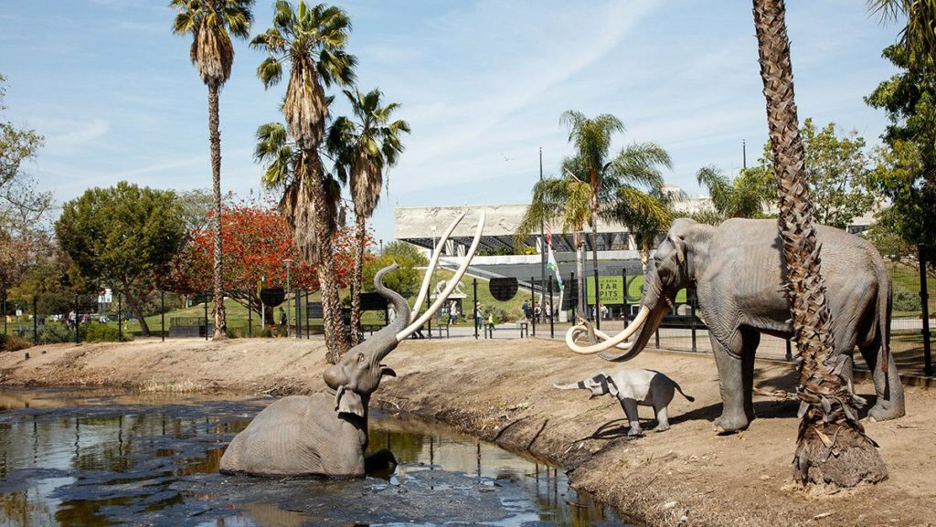 Gegenwart. Besuchermagnet mit großer Fan-Gemeinde: Die Mammut-Familie. (Foto: La Brea Tar Pits)