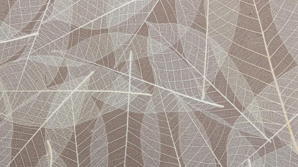 Organoids Natural Surface