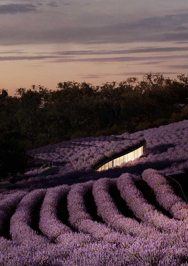 Lavender Center, Voco, Hachem