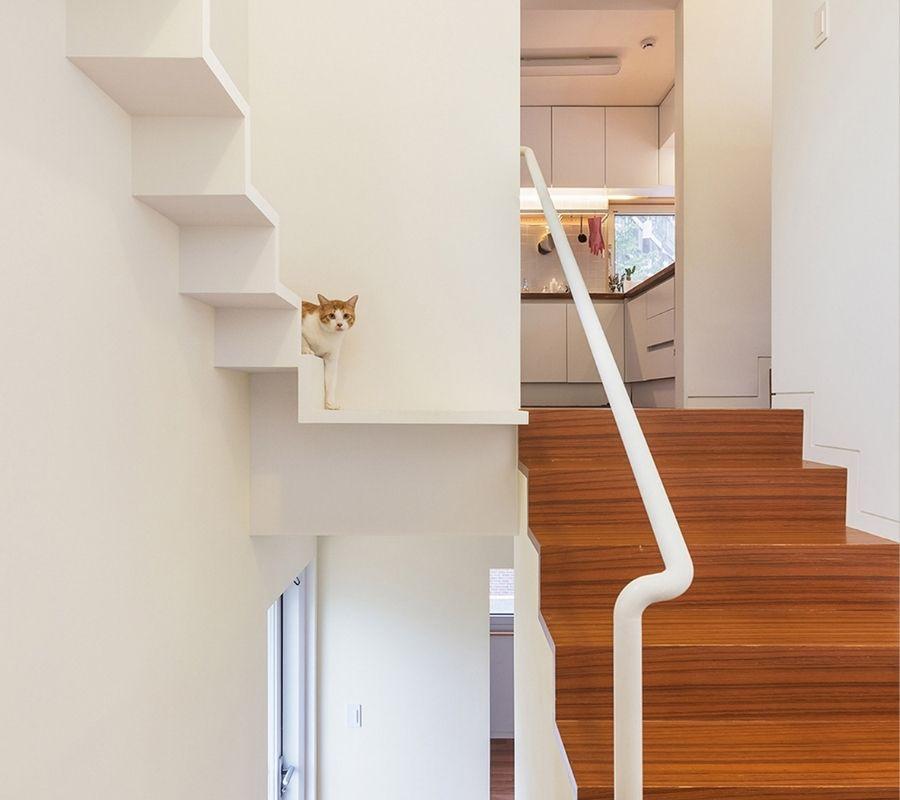 Cat Walk im Haus