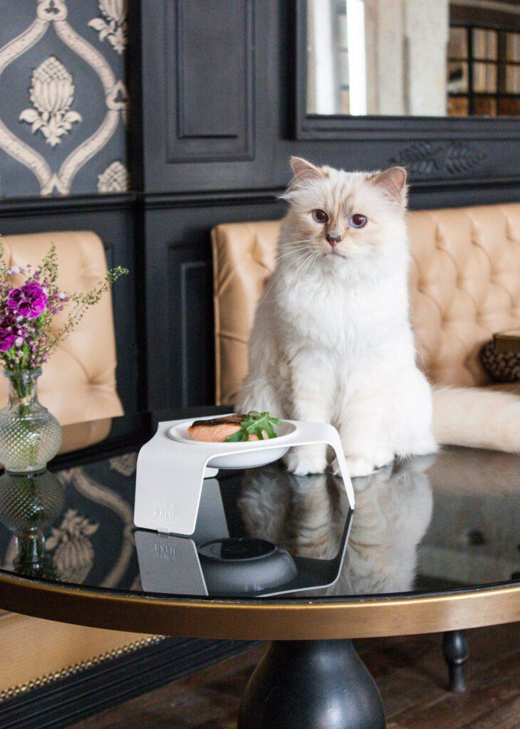 Jetset- und Model-Katze Choupette