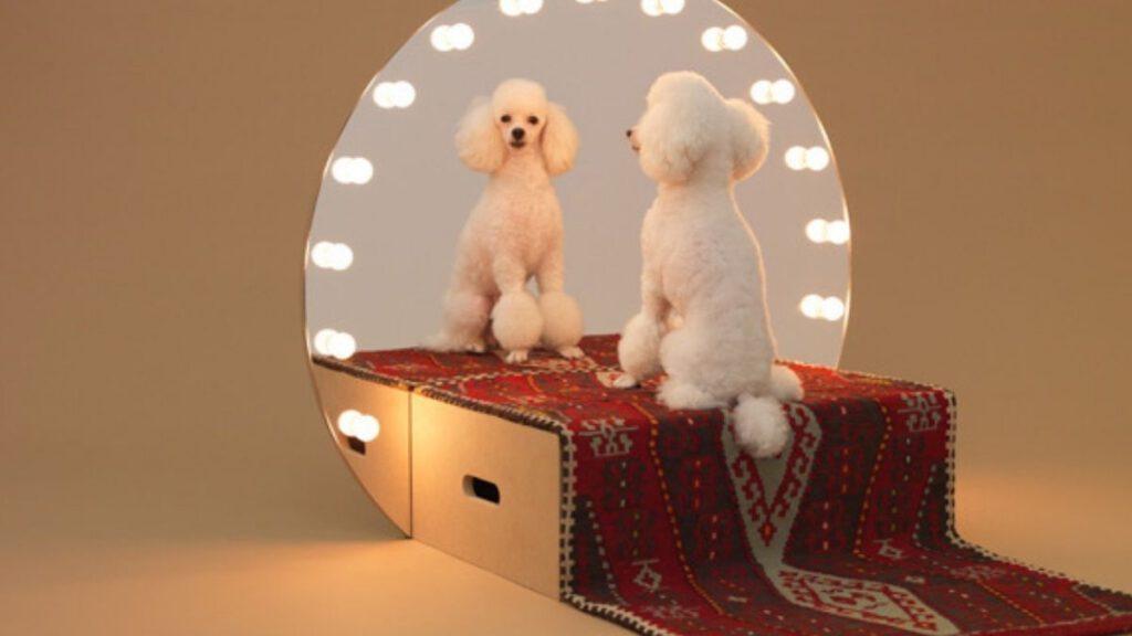 Spiegel für Hund von Konstantin Grcic