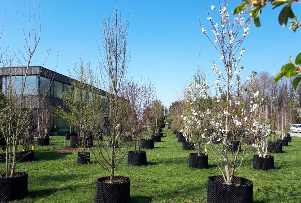Visually appealing, and an active contribution to climate protection: 160 trees from the Baumschule Jakel nursery will add greenery to the new furniture store. (Image: Baumschule / JAKEL)