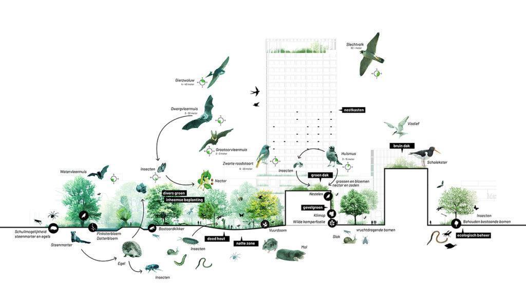 Das Projekt HOLT in Groningen führt Stadt und Natur zusammen. (Bild: Powerhouse Company)