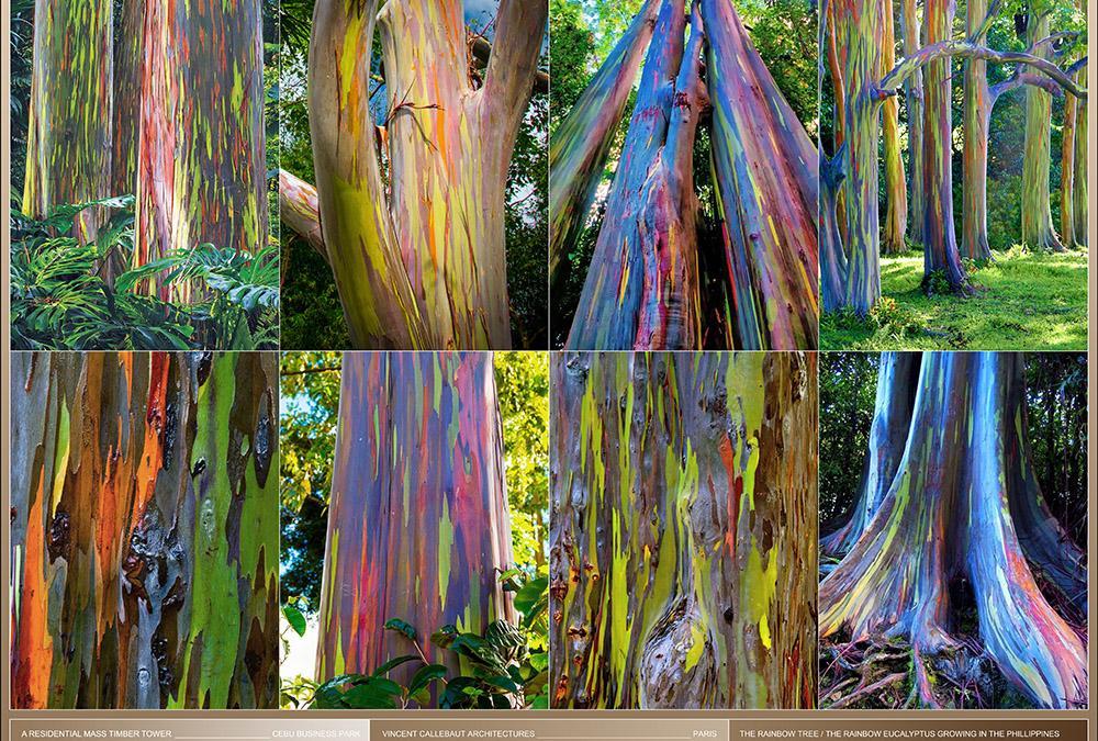 """Lebendige Farbkraft: Der Eukalyptus Deglupta – auch """"Rainbow Tree"""" genannt. (Bild: Vincent Callebaut Architecture)"""